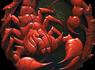 L5C01_Scorpion_mikro